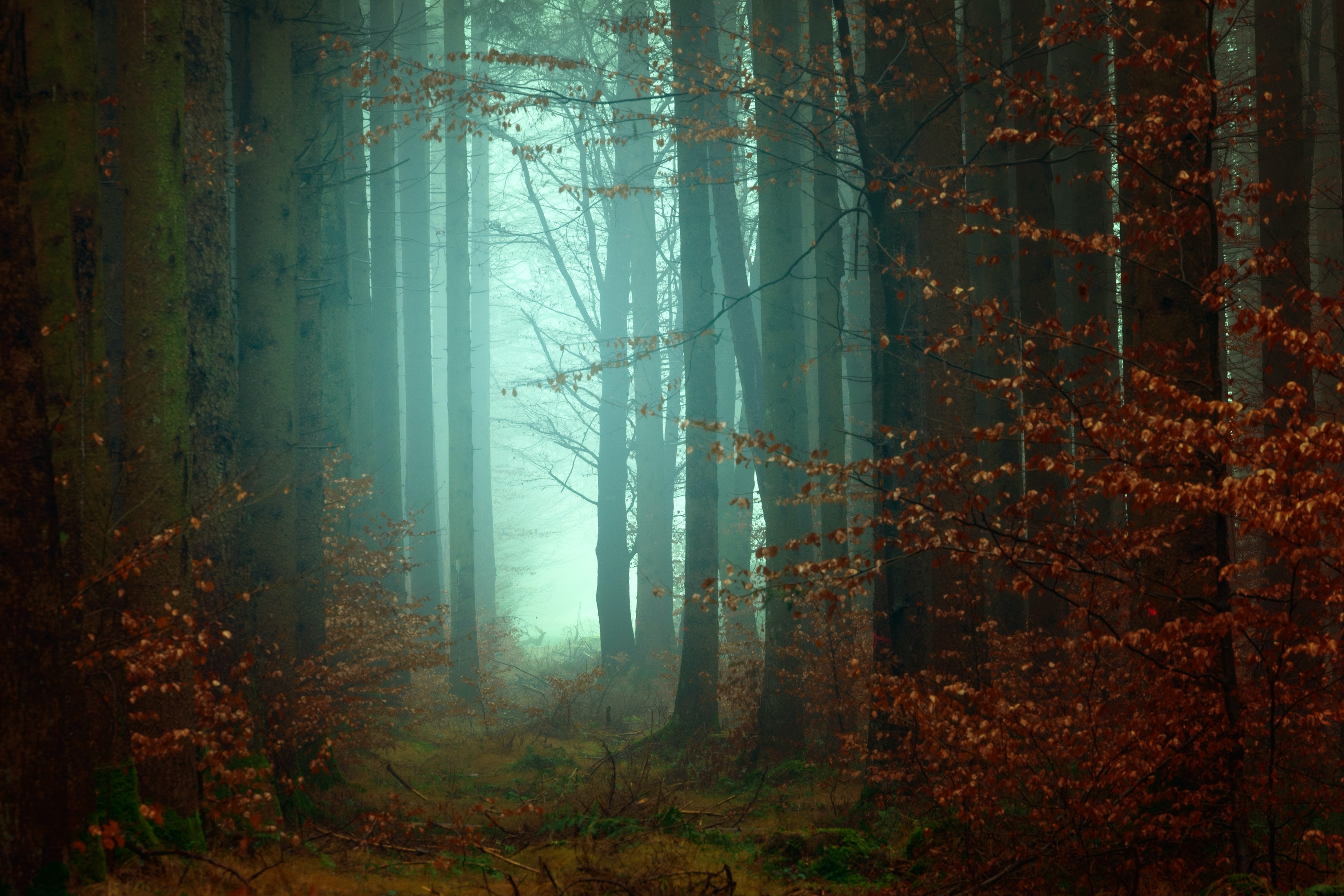 Removing your blockages like fog in a forest to read energies purely.