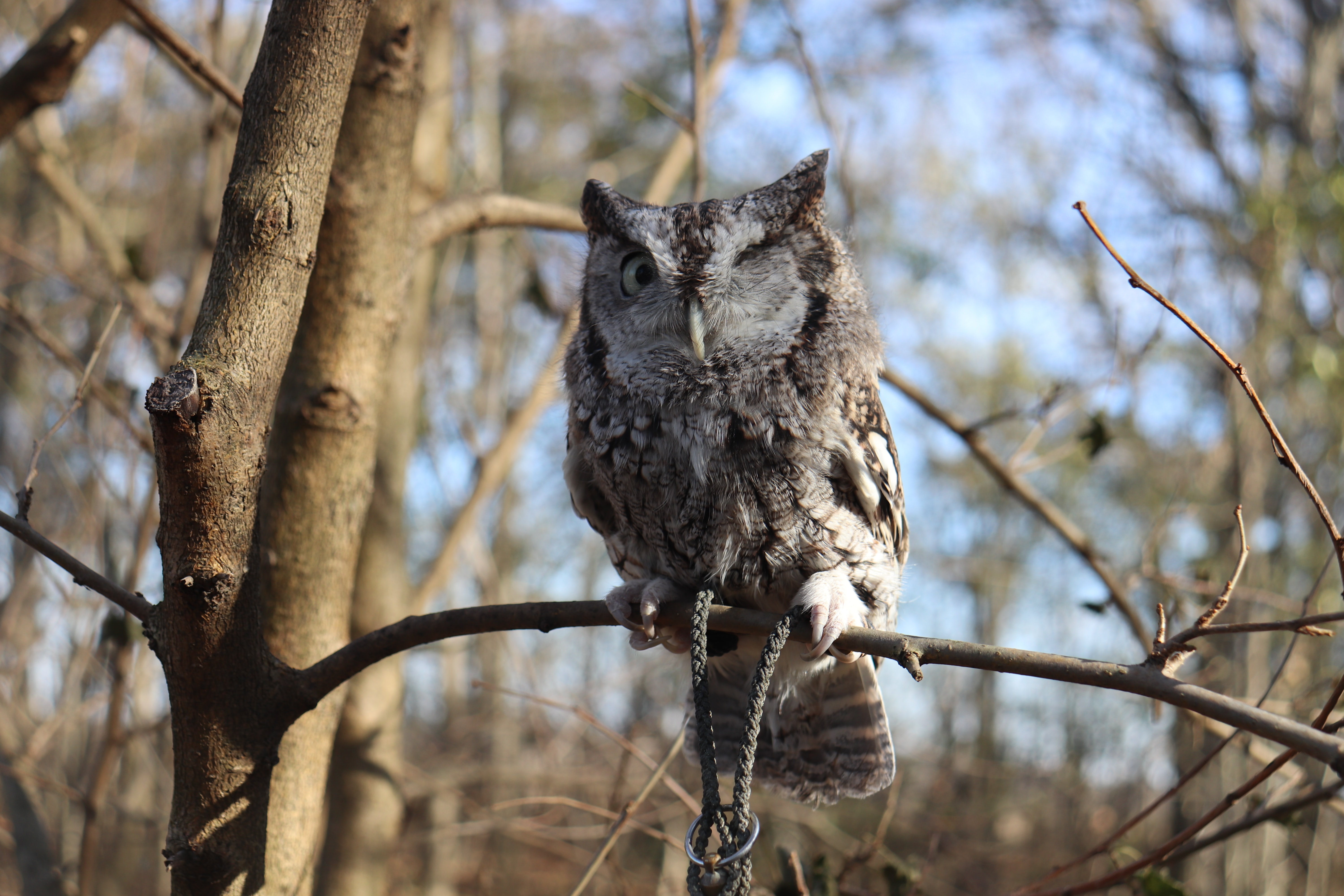 As wise as this owl in this daylit forest.